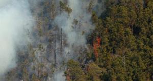 Fuegos forestales